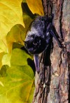Bug-busting bats are needlessly maligned