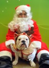 For pet-owners, holiday plans revolve around pets