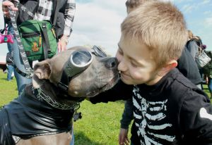 Coast-to-Coast Bully Walk promotes positives of pit bulls