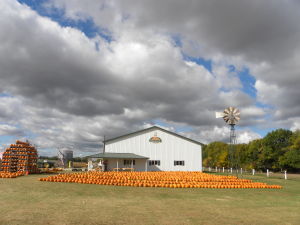 Perusing the pumpkin patch