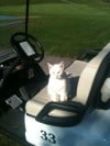 Golf course cat's disappearance baffles staff members