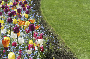 Cold weather advice for healing Spring from Lawn Doctor of West Lake County
