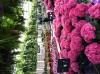 Best garden/nursery store (MI)