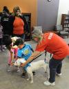Pet adoption: Make sure you do your homework