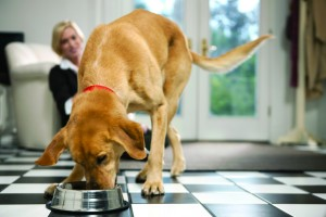 Pet Food Labels Decoded