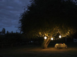 Light it up: Creative garden illumination beyond the citronella candle