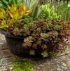 Gardening-Saving Container Plants
