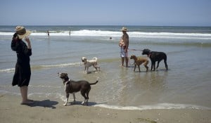 Life's a beach for lucky dogs free to run on sand
