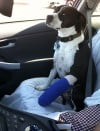 Take extra care handling pet with broken bone