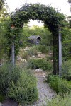 Secret Garden? Tips for creating backyard privacy