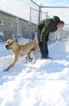 Keeping animals safe during the cold snap