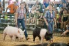 Porter County Fair's showmanship contest helps develop leaders