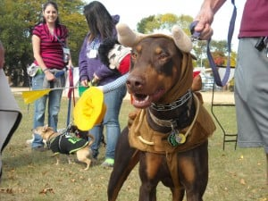Calumet City Dog Walk is on Sept. 14