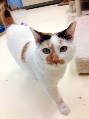 Pet of the week: Patches
