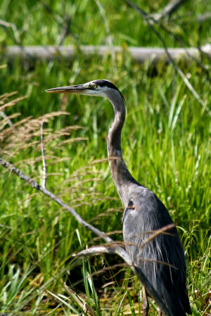 Bird Watching: Northwest Indiana offers an abundance of feathered species to appreciate