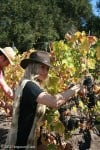 Singer Fergie Picking Grapes at Family's California Winery