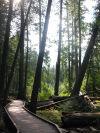 Cedar forest.jpg