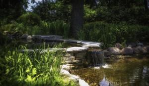 Walk the Region: Cancer Resource Centre gardens inspire patients' art