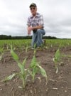 Corn is emerging on Martin Kroll's land in southwest Lake County.