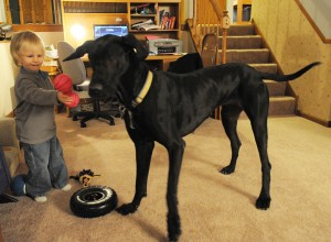 Gallery: Nate Corder and his dog