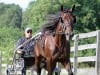 Local owners hope for top finish at Hambletonian