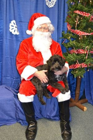 Pets can visit Santa at Glenwood toy drive