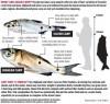 Graphic - Asian carp