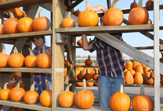 Pumpkin patch pickers