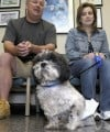 Resilient dog survives prostate cancer