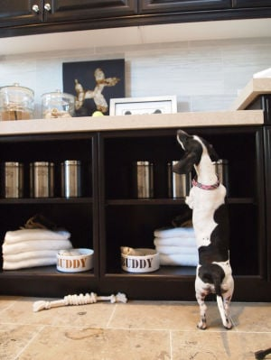 Pets' amenities rising trend for homebuilders