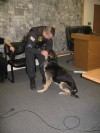 Changing of the guard: One Hobart police canine retires , another starts career