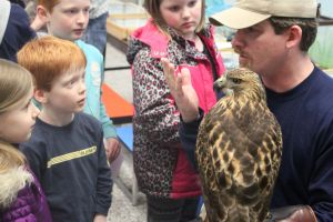Jackson Nature Night features red-tailed hawk