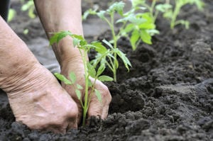 Extreme winter = good gardens: Experts predict good growing season for 2014