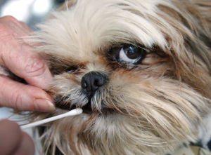 Dog-doo scofflaws get bagged through DNA testing