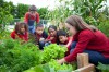 Liberty Elementary to host Teaching Garden Harvest Day