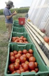 Harvest bountiful at UI student farm