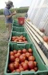 Harvest bountiful at UI student farm