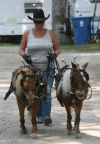 Times Day at the Lake County Fair Saturday