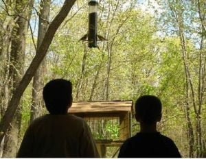 Learn bird feeding basics