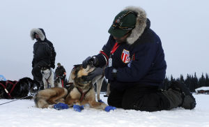 5 things to know about Iditarod's furry athletes