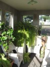 Back Porch with Ferns and Plants at The Potempa Family Farm