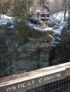 St. Mary's School Environmental Club views eagles