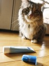 Cure for bad pet breath could be a toothbrush away
