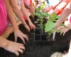 Green thumbs: Teaching Garden project hopes to instill good habits at an early age
