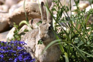 Take control of your garden from pests