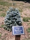 Lowell families plant tree in memory of Fuerstenbergs