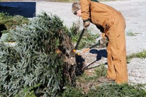 'Growing Family Traditions:' Christmas tree farms help residents prepare for the holidays