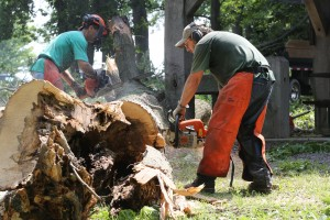 Trees uprooted at Porter County park; volunteers sought to help cleanup