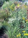 Chesterton educator lectures about restoring the earth's eco-balance with native plants