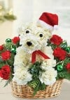 A-DOG-Able Santa Paws Flower Arrangement from 1-800-FLOWERS.com